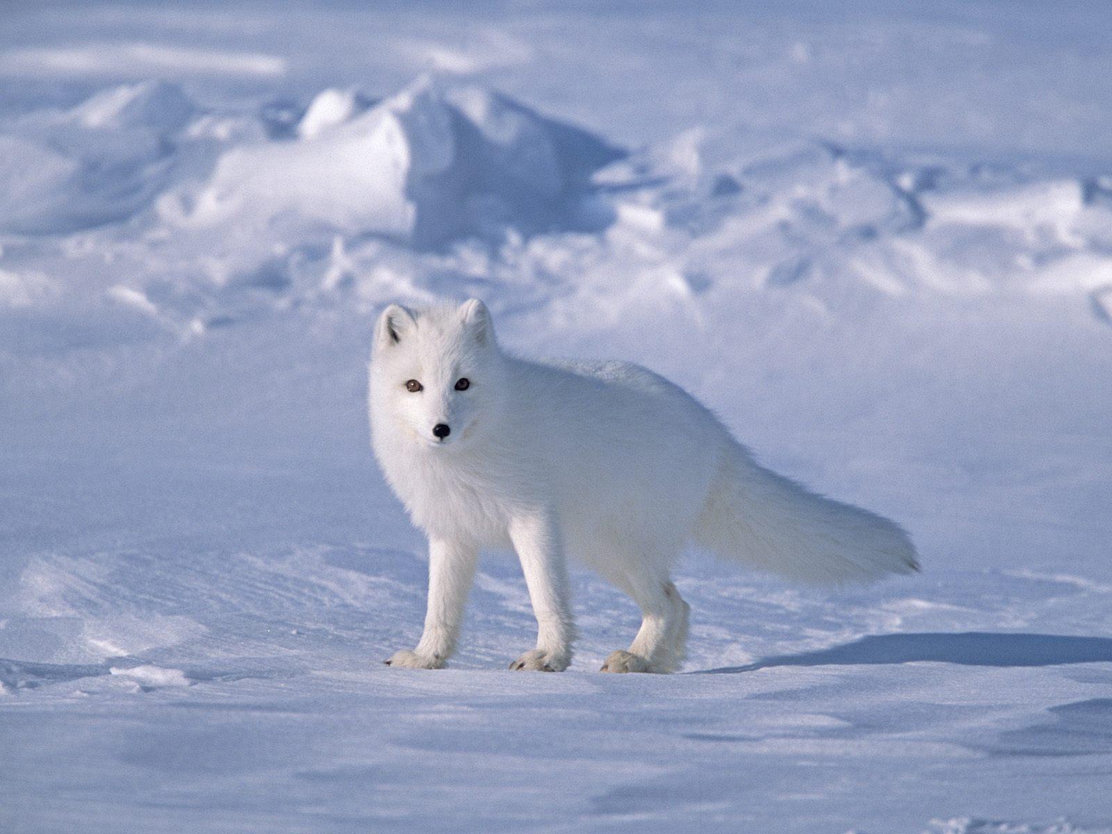 Slope_Near_Arctic